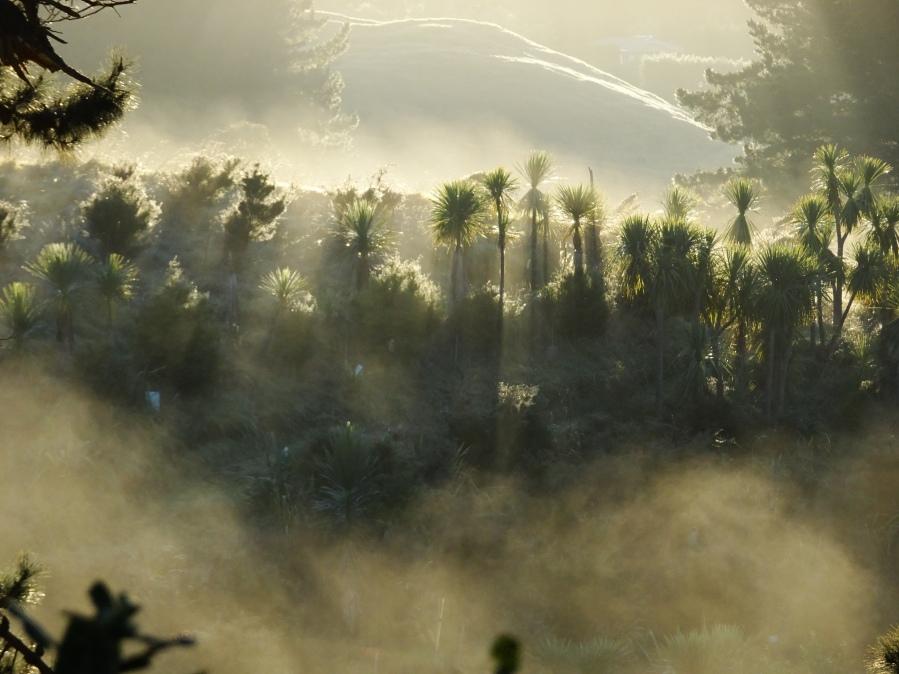 Mist at Te Maimai