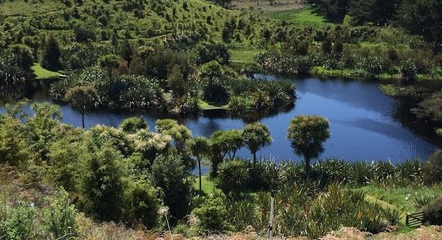 Wetlands at Te Maimai
