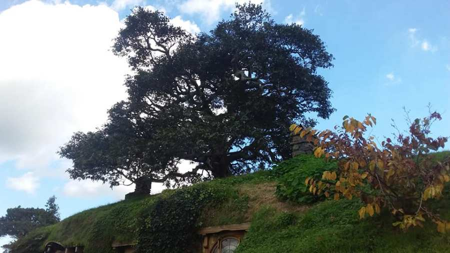 Hobbiton fake tree